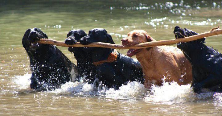 team_dogs.jpg